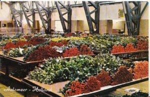 Netherlands Postcard - Aalsmeer - Holland - Interior Flower Auction - Ref 5847A