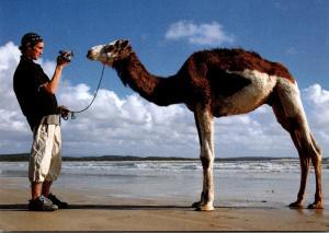 Advertising Silvertab Levis Camel Having Picture Taken