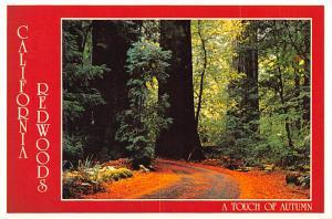Redwoods - California