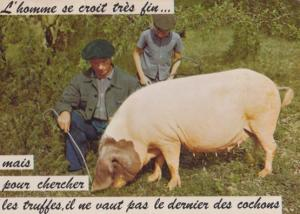 Pig Nose Banged Smelling Ground French France Postcard