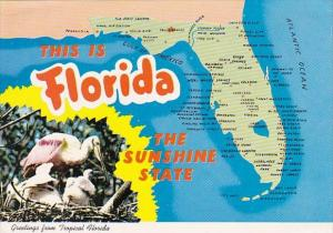 A State Map Of Florida Greetings From Tropical Florida
