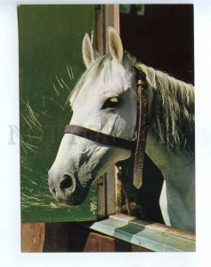 218632 GERMANY white horse photo old postcard