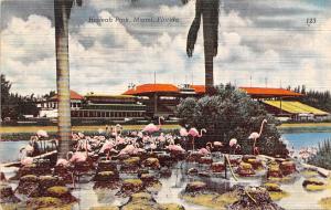 Florida, Miami, Hialeah Park, pink flamingos, palm trees