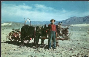California Typical Prospector Burro WANDERS OF THE WASTE LANDS Death Valley - C