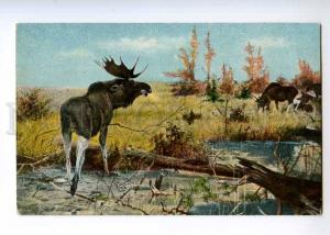 235965 RUSSIA Elk HUNT vintage EGSiS postcard #508