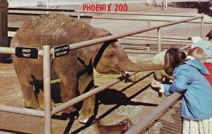 Baby Asian Elephant Phoenix Zoo Papago Park Phoenix Arizona