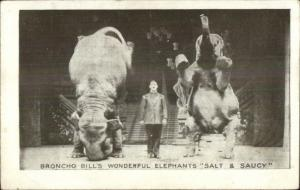 Broncho Bill's Performing Circus Elephants Salt & Saucy c1910 Postcard