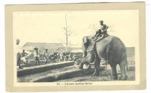 Elephant Stacking Timber , 00-10s