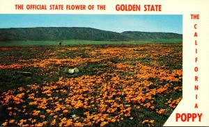 California Official State Flower The California Poppy