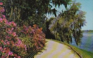 Magnolia Worlds Most Beautiful Garden Charleston South Carolina