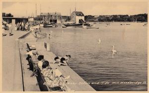 River Deben Woodbridge Swans Girl Nearly Falling Old Suffolk Real Photo Postcard