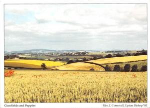 Cornfields and Poppies Bromsash