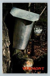 VT- Vermont, The Sap Bucket, Maple Tree, Warm Days, Chrome Postcard