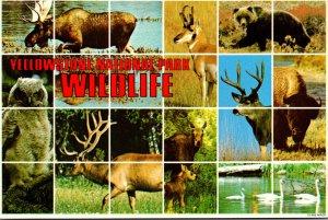Wyoming Yellowstone National Park Wildlife Scenes