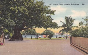 NASSAU , Bahamas , 1930-40s ; Silk Cotton Tree