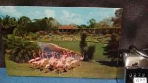 STD Vintage Flamingoes at Flamingo Lake Miami's Parrot Jungle Florida Unposted