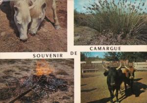 France Camargue Multi View With Wild Horses