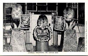 Missouri St Louis Zoological Gardens Lions Animal Training
