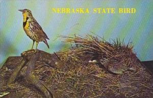 Nebraska Hastings Meadowlark Nebraska State Bird