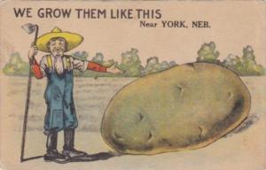 Humour Exageration Giant Potato We Grow Them Like This In York Nebraska 1922