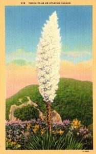 California Yucca Palm Or Spanish Dagger Curteich