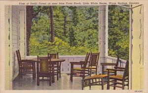 View Of Sunlit Forest As Seen From Front Porch Little Whte House Warm Springs...