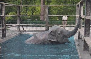 Toots The Baby Elephant In Her Bath Zoological Park Toledo Ohio