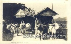 Malaysia, Malaya  Malay Bullock Carts Real Photo