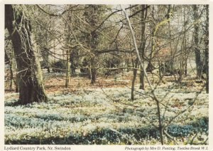 Lydiard Country Park Swindon Wiltshire Rare 1980s Postcard