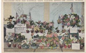 ESTERO , Florida, 1900-10s; Caladium Flowers Display