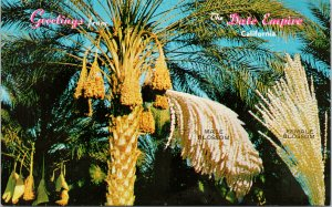 Greetings from Date Empire Indio CA Coachella Valley Unused Vintage Postcard F65