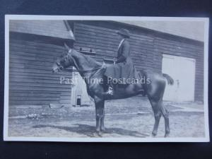 LADY MOUNTED ON BLACK HORSE early RP Postcard