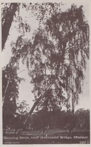 Braemar Weeping Birch Tree Invercauld Bridge Vintage Real Photo Postcard