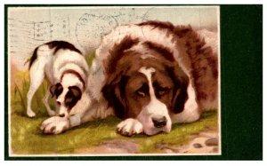 Dog , Saint  Bernard , Mother with puppy