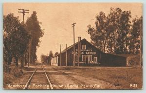 Santa Paula CA~Blanchard's Orange Lemon Packing House~RR Tracks~c1910 Sepia PC