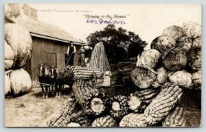 Luverne MN~Northern Crops* Beat Illinois~Exaggerated Corn~Cabbage~RPPC 1909 PC