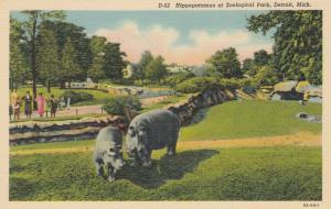DETROIT , Michigan, 30-40s ; Hippopotamus at Zoological Park