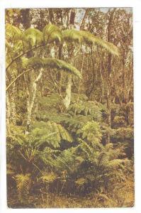 Hawaiian Fern Forests road to Kilauea, part of the Hawaii National Park, Isla...