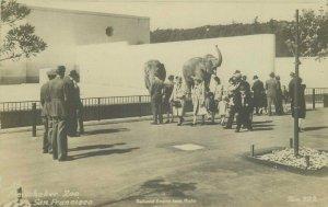 Elephants Redwood Empire San Francisco California RPPC Photo Postcard Zoo 20-184