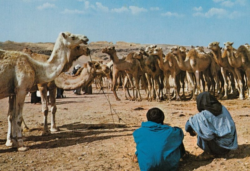 Morocco ,  1950-70s ; Market of Camels