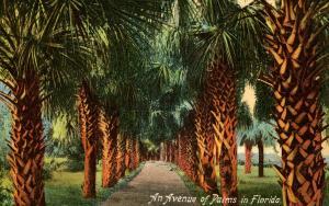 FL - An Avenue of Palms