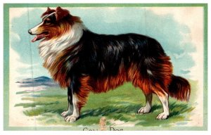 Dog , Collie