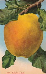 Belleflower Apple Fruit by Edward Mitchell