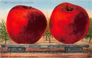 Exaggerated Red Apples SP Railroad Car Exaggeration 1910 postcard