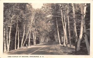 Shelburne New Hampshire~US Highway 2~Avenue of Birch Trees c1910 Postcard
