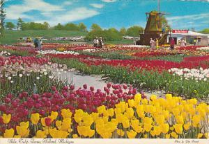 Nelis Tulip Farm and Windmill Holland Michigan