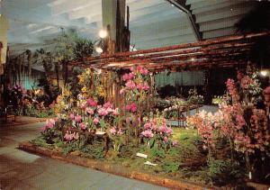 Internationale Gartenbau Ausstellung Hamburg Halle der Orchideen Blumen