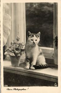 Cat Postcard Kittens (1930s) RPPC (7)