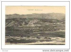 Horses Grazing, Marche du Lundi, Taza-Haut, Morocco, 1900-10s