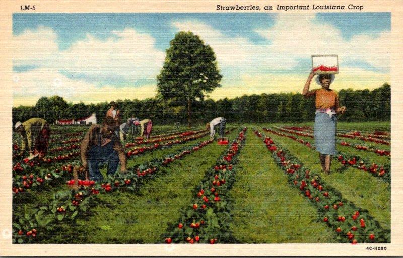Louisiana Strawberries An Important Louisiana Crop Curteich